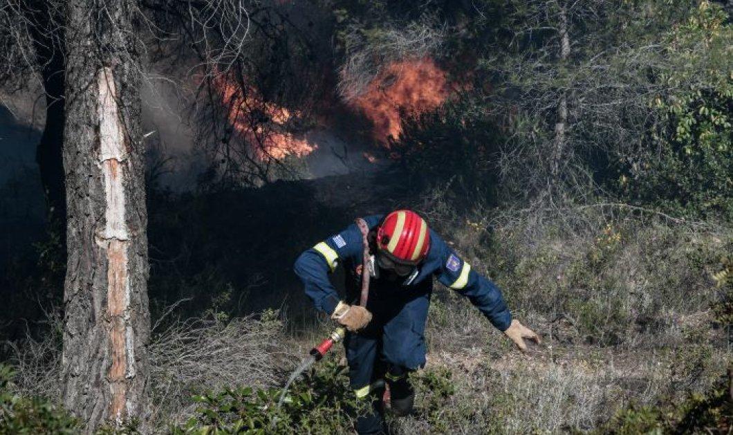 Ν. Χαρδαλιάς: Πάνω από 40 χιλιάδες στρέμματα έγιναν στάχτη στα Γεράνεια Όρη – Καλύτερη σήμερα η εικόνα (φωτό - βίντεο) - Κυρίως Φωτογραφία - Gallery - Video