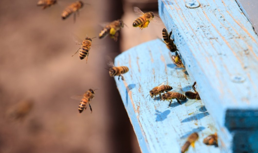 Αιγύπτιος πατέρας έδεσε τον γιο του σε πάσσαλο & κάλυψε το σώμα του με μέλι  - Τον τσίμπησαν οι μέλισσες για τιμωρία (φωτό) - Κυρίως Φωτογραφία - Gallery - Video