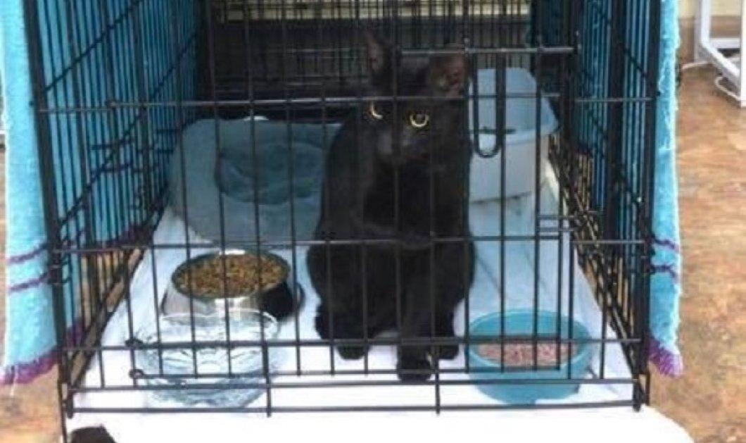 Μαϊάμι: Ο γάτος ζωντανός από τα συντρίμμια της πολυκατοικίας μετά από 16 ημέρες - το θαύμα, η συγκίνηση, το σοκ, η χαρά (φωτό & βίντεο) - Κυρίως Φωτογραφία - Gallery - Video