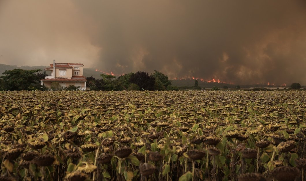 Βιβλική καταστροφή στην Εύβοια -  Προσπάθεια απεγκλωβισμού πολιτών - Σοκάρουν οι εικόνες της χειρότερης πυρκαγιάς του αιώνα (φώτο-βίντεο) - Κυρίως Φωτογραφία - Gallery - Video