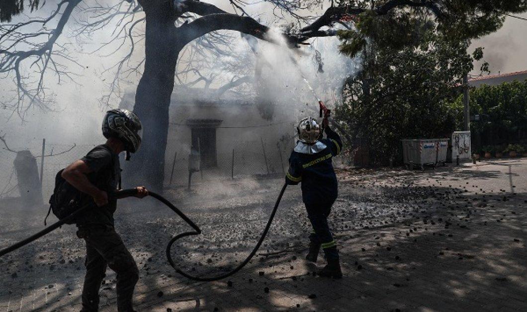 Πυρκαγιά στο Κρυονέρι: Δίωξη για εμπρησμό σε βάρος 43χρονου - δίωξη και για την φωτιά στο Πεδίον του Άρεως (βίντεο) - Κυρίως Φωτογραφία - Gallery - Video