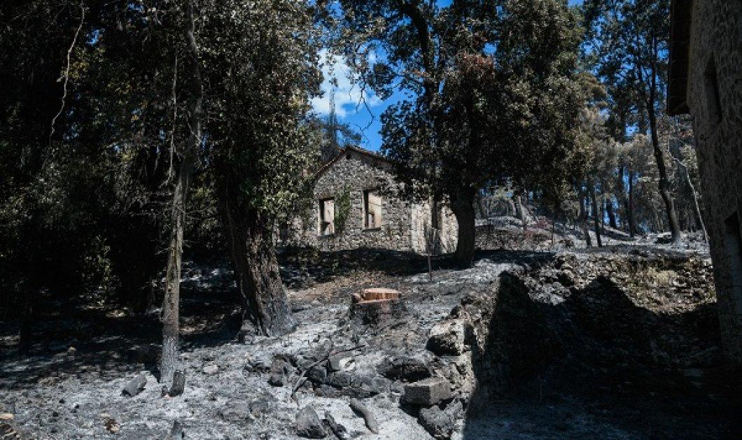 Όλες οι εικόνες από τα πρώην βασιλικά κτήματα στο Τατόι - απανθρακώθηκαν πάνω από 50.000 στρέμματα στην Πάρνηθα - Κυρίως Φωτογραφία - Gallery - Video