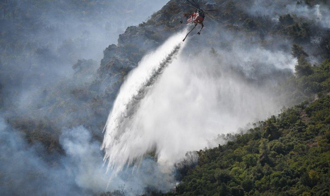 Πυρκαγιές - η επόμενη μέρα στην Αττική: Εικόνες καταστροφής από το πέρασμα της φωτιάς - περιπολίες στα καμένα (φωτό & βίντεο) - Κυρίως Φωτογραφία - Gallery - Video