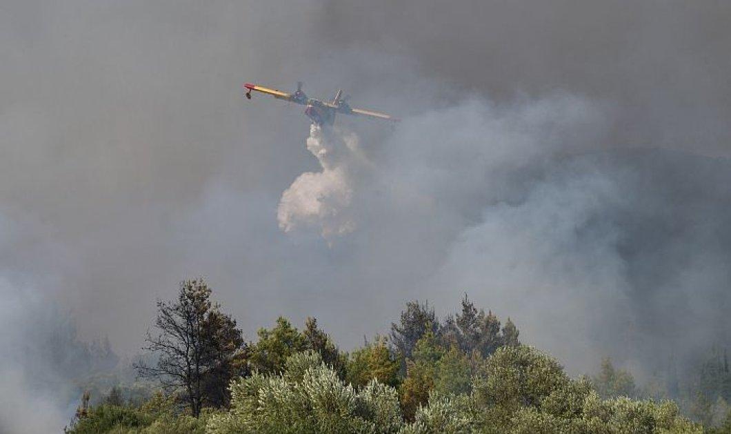 Αναζωπυρώσεις της φωτιάς σε Βόρεια Εύβοια και Γορτυνία - Μήνυμα για εκκένωση σε τρία χωριά (βίντεο) - Κυρίως Φωτογραφία - Gallery - Video