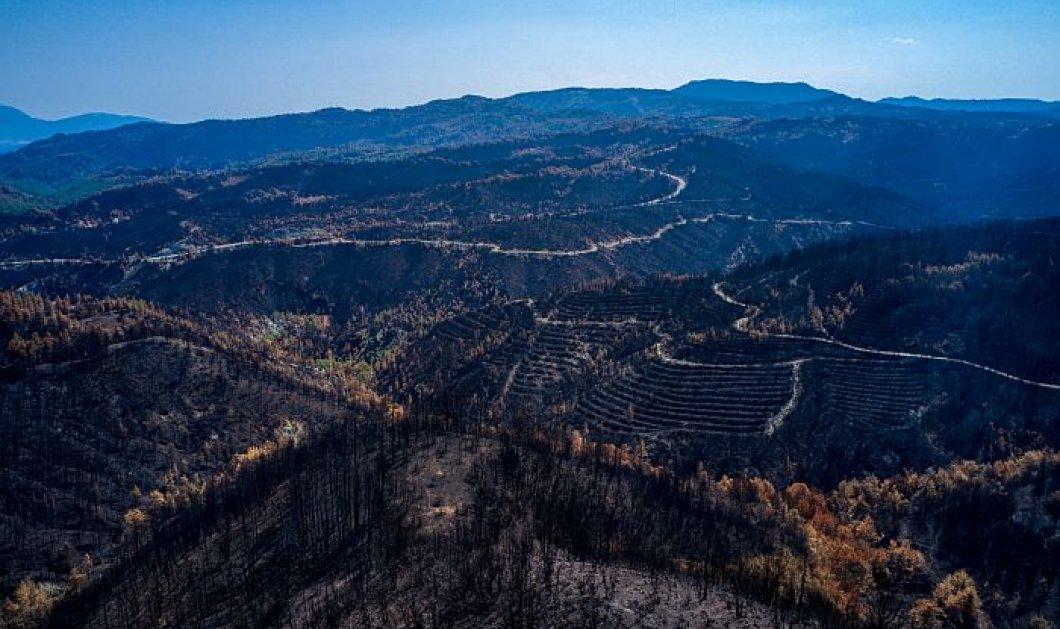 Έρευνα σοκ του Αστεροσκοπείου - To 1/3 των δασών της Εύβοιας κάηκε από την πρόσφατη πυρκαγιά (βίντεο)   - Κυρίως Φωτογραφία - Gallery - Video