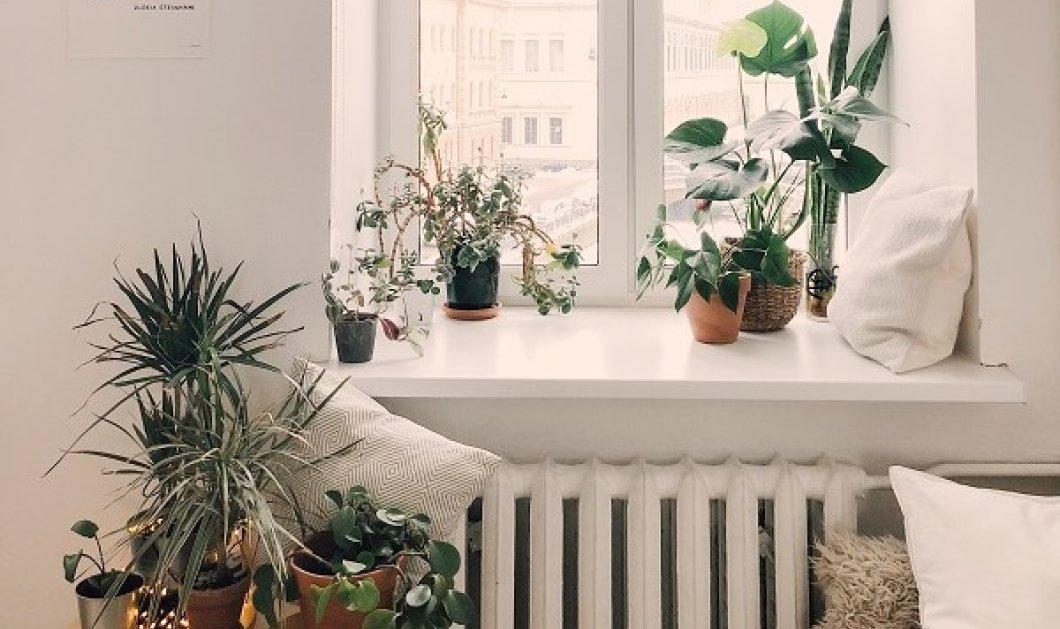 Ο Σπύρος Σούλης δίνει ιδέες: 7 τρόποι για να βάλετε φυτά στο σπίτι σας - μεταμορφώνουν τον χώρο (φωτό) - Κυρίως Φωτογραφία - Gallery - Video