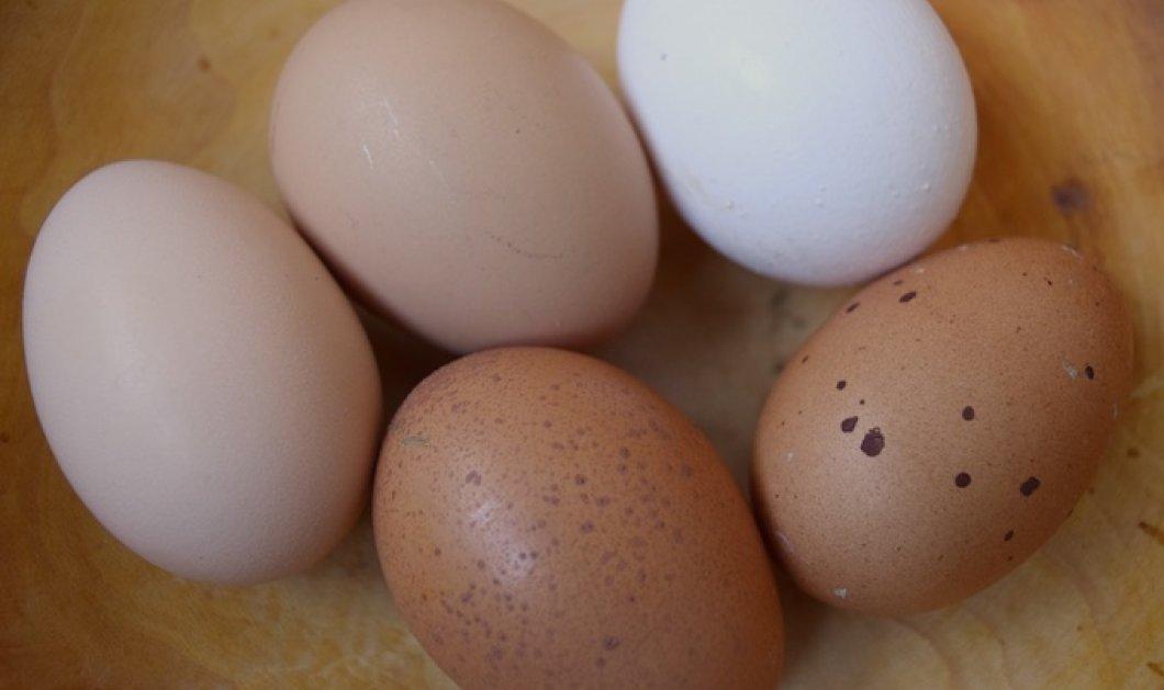 Αυγά άσπρα, αυγά σκούρα: Ποια είναι τα καλύτερα; Ο Νίκος Ορφανός μας λέει - Κυρίως Φωτογραφία - Gallery - Video
