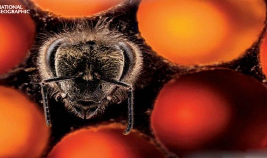 Απίθανο βίντεο: O μαγικός τρόπος που γεννιούνται οι μέλισσες! Ασύλληπτο! - Κυρίως Φωτογραφία - Gallery - Video