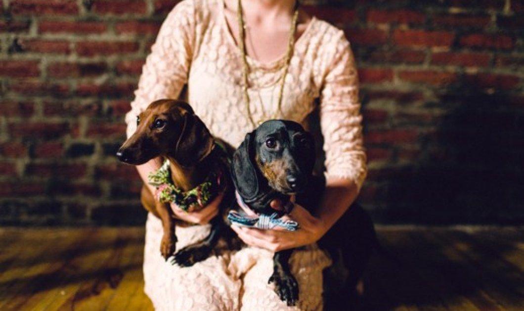 2 αξιολάτρευτα σκυλάκια παντρεύτηκαν με κάθε επισημότητα! Ο Hudson και η Chelsea πέρασαν της εκκλησιάς την πόρτα με παπά & με κουμπάρο! - Κυρίως Φωτογραφία - Gallery - Video