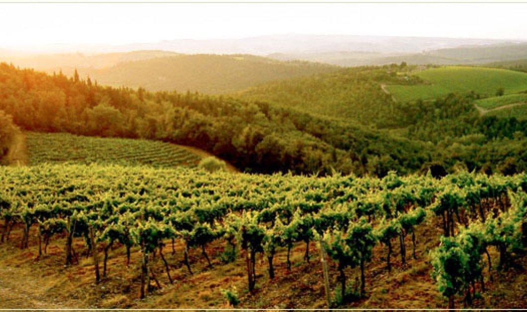 Οι top περιοχές παραγωγής κρασιού παγκοσμίως! - Κυρίως Φωτογραφία - Gallery - Video