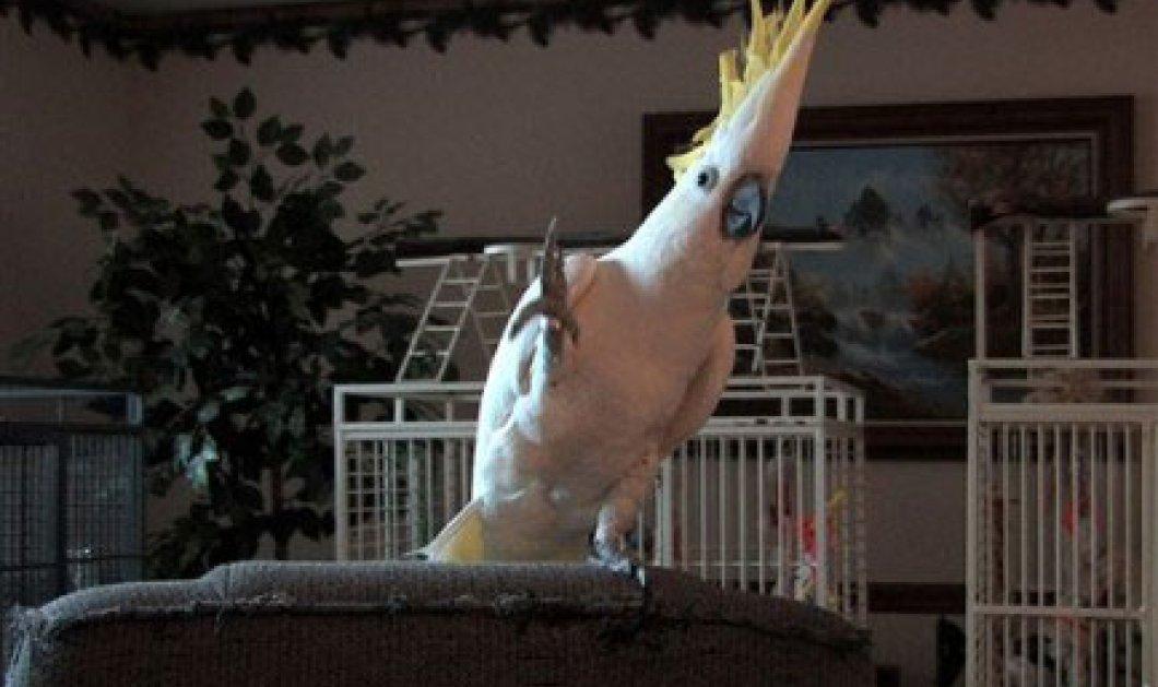 Δείτε 4 βίντεο με τα παιδιά σας: Παπαγάλοι που χορεύουν ή έχουν ειδικές ικανότητες για να ΄΄τσιμπήσουν΄΄ το φαγητό τους - Κυρίως Φωτογραφία - Gallery - Video
