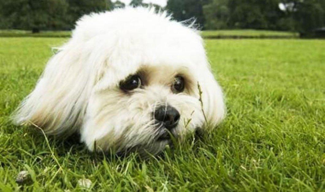 Τα 8 οφέλη στην υγεία μας από την συντροφιά μας με τον σκύλο ή τη γάτα μας  - Κυρίως Φωτογραφία - Gallery - Video