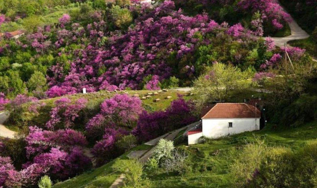 Η φωτογραφία της ημέρας - Από αυτό το πανέμορφο τοπίο της Καρδίτσας  καλή σας μέρα!  - Κυρίως Φωτογραφία - Gallery - Video