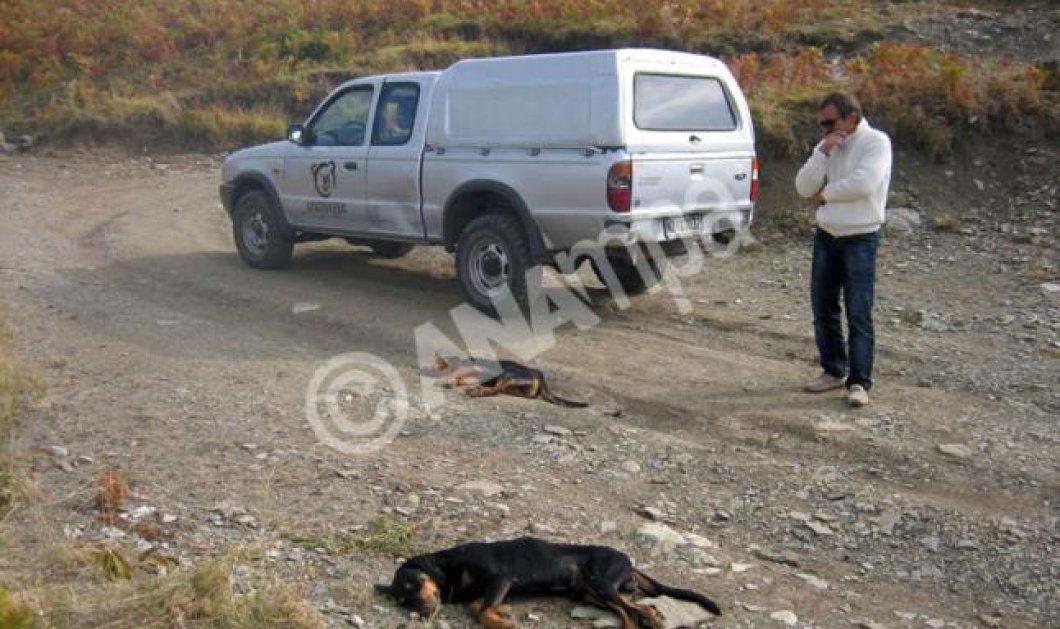 Αίσχος! Ανθρωπόμορφα κτήνη δηλητηρίασαν σκύλους με τοξικά «δολώματα»! - Κυρίως Φωτογραφία - Gallery - Video