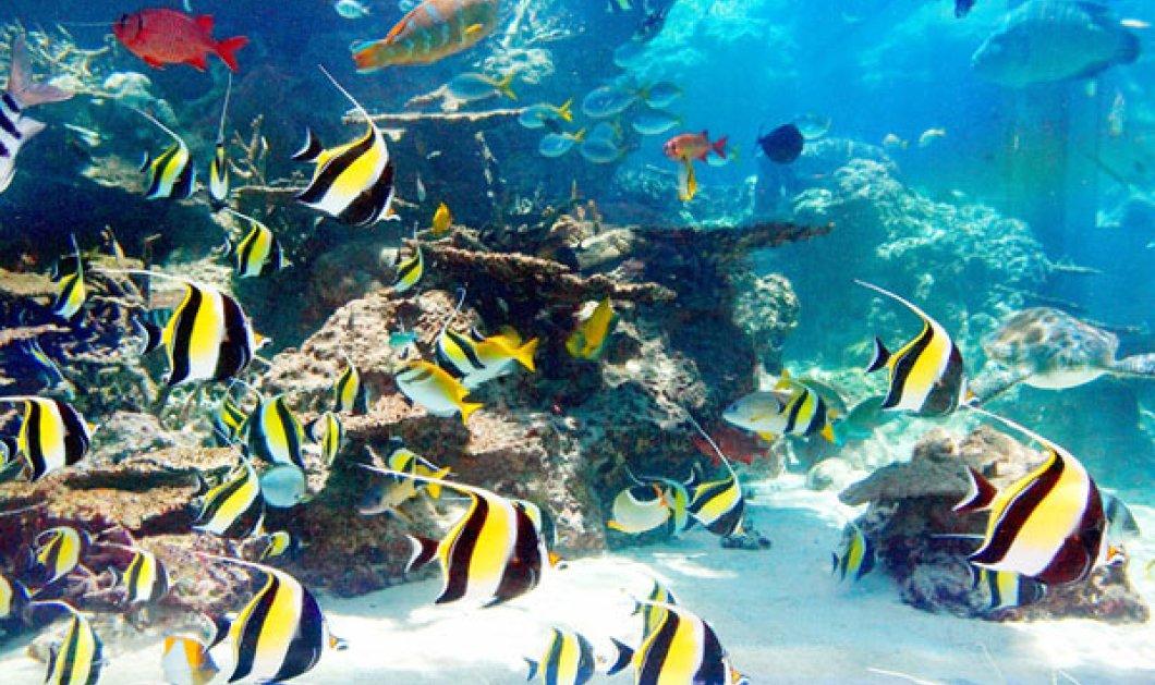 Μια μαγική «βουτιά» στο βαθύ γαλάζιο του ενυδρείου Churaumi Aquarium της Οκινάουα (φωτό & βίντεο) - Κυρίως Φωτογραφία - Gallery - Video
