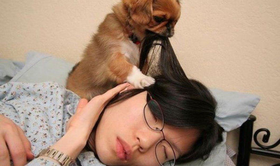 Τελικά έχει πολλή πλάκα να έχεις σκύλο (φωτογραφίες) - Κυρίως Φωτογραφία - Gallery - Video