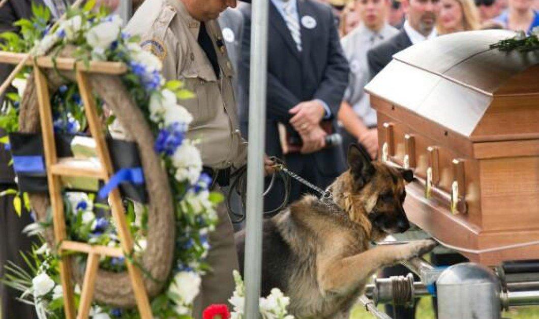 Ο συγκινητικός και τόσο «ανθρώπινος» αποχαιρετισμός του αστυνομικού σκύλου Φίγκο στο αφεντικό του που σκοτώθηκε στο καθήκον (φωτό) - Κυρίως Φωτογραφία - Gallery - Video