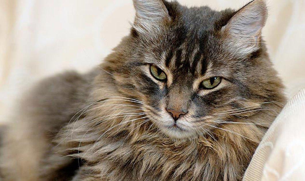 Έχετε γάτα; Να, τα οκτώ πλεονεκτήματα να έχετε κοντά σας μία ... γατούλα  - Κυρίως Φωτογραφία - Gallery - Video