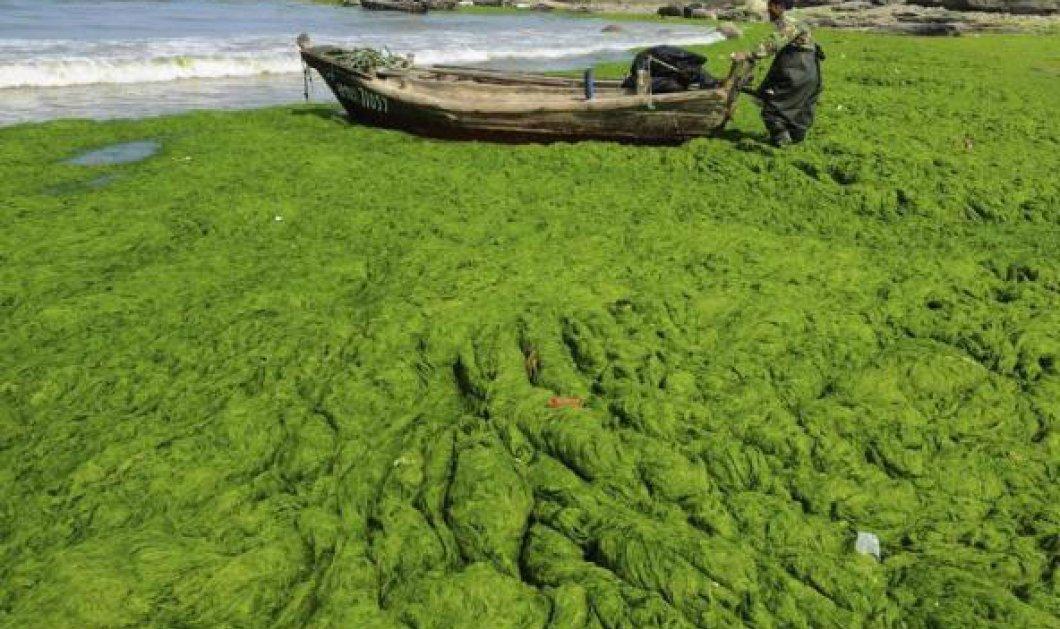 Καταπληκτικές φωτογραφίες από την καταπράσινη Κίνα: ''Πνίγηκε'' στα φύκια!  - Κυρίως Φωτογραφία - Gallery - Video