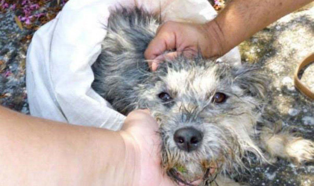 Έτσι μπράβο:Η πιο μεγάλη χρηματική ποινή για κακοποίηση ζώου-31.200 ευρώ πρόστιμο από τον Δήμο Κιλκίς επειδή πέταξε το σκυλί του! - Κυρίως Φωτογραφία - Gallery - Video