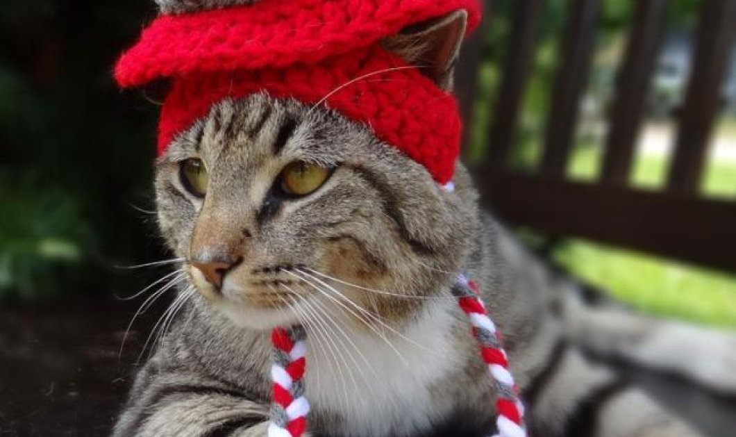 Γιατί με αυτά τα τρισχαριτωμένα σκουφάκια για τις γάτες σας έγινε το «έλα να δεις» στο διαδίκτυο; (φωτογραφίες)  - Κυρίως Φωτογραφία - Gallery - Video