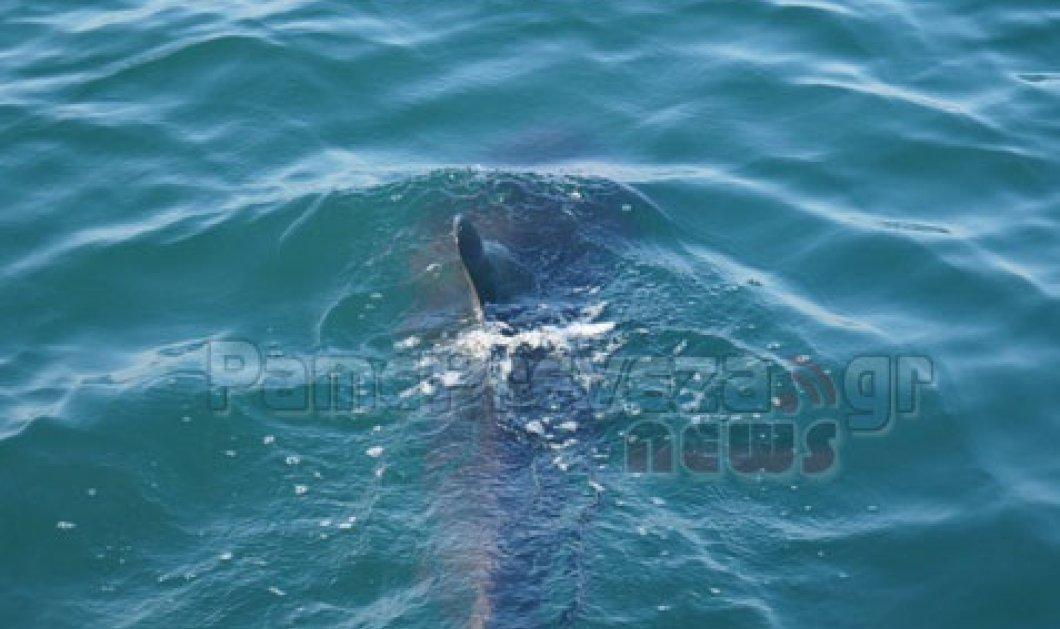 Πάμε Πρέβεζα καβάλα στο δελφίνι, τον κόσμο γύρισα, είπα να σε ξεχάσω μα σ'αποθύμησαααα! (βίντεο)    - Κυρίως Φωτογραφία - Gallery - Video