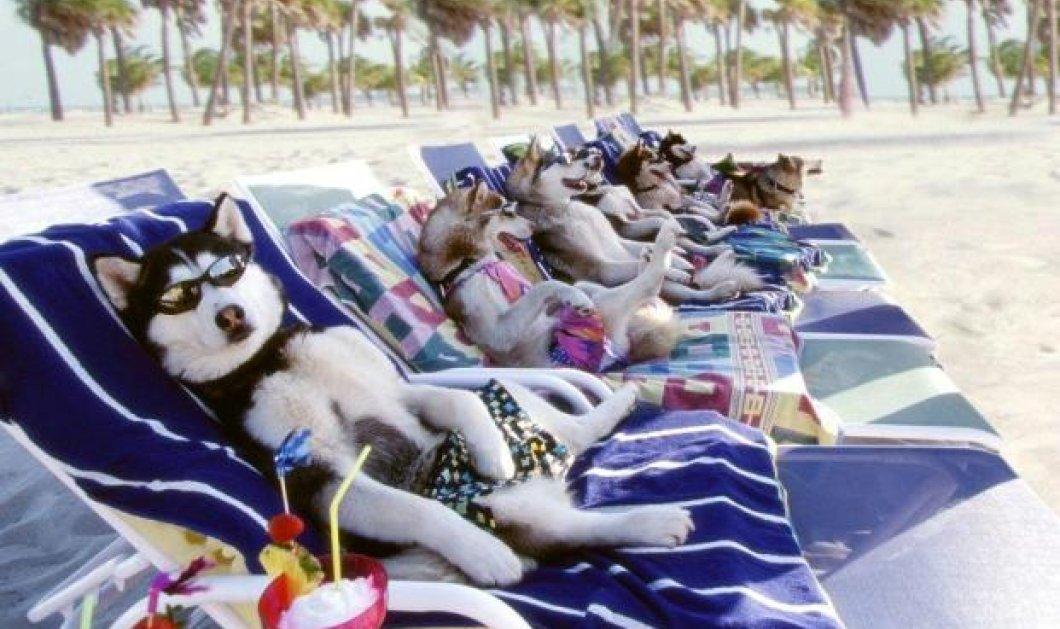 Η σκυλίσια ζωή το καλοκαίρι - Όλα όσα πρέπει να ξέρετε και να ακολουθείτε για να νοιώθει καλά ο σκύλος σας με τη ζέστη  - Κυρίως Φωτογραφία - Gallery - Video