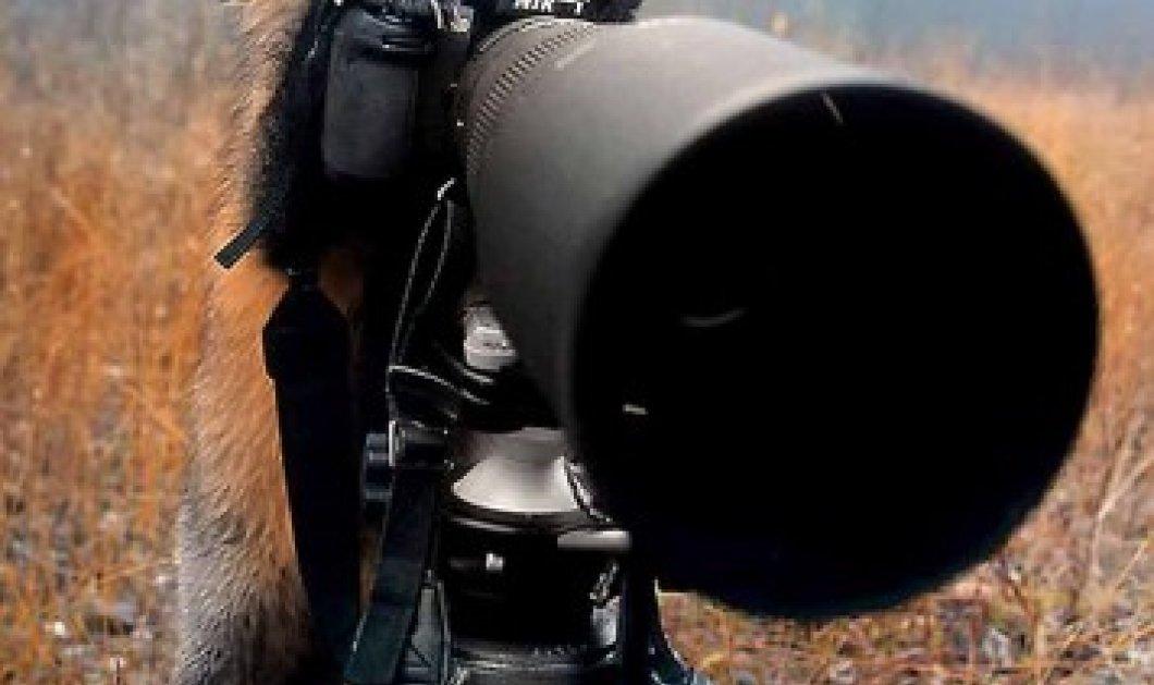 Smile:  Η αλεπού  «καβάλησε»  την φωτογραφική που άφησε για δευτερόλεπτα από τα μάτια της η φωτογράφος ... - Κυρίως Φωτογραφία - Gallery - Video