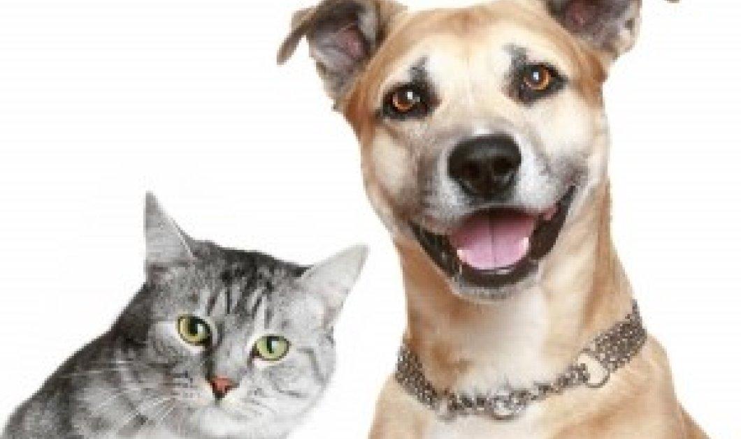 Σκύλος ή γάτα; Ποιος είναι ο καλύτερος φίλος του ανθρώπου; Δείτε 2...κατατοπιστικά βίντεο! - Κυρίως Φωτογραφία - Gallery - Video