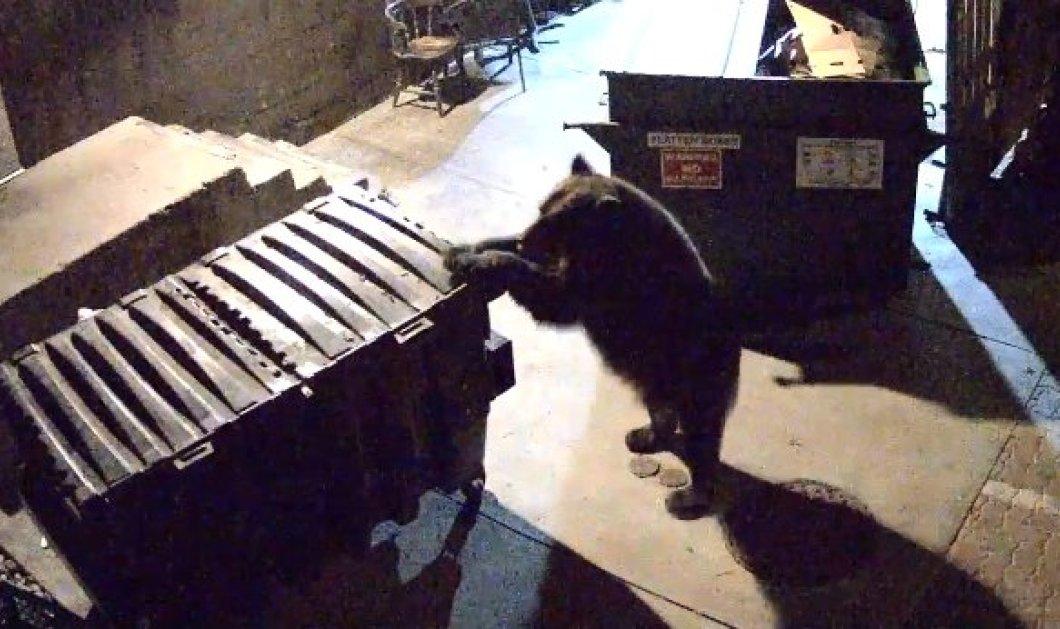 Εκπληκτικό βίντεο: Δείτε μια αρκούδα που αναζητώντας φαγητό, «κλέβει» ολόκληρο κάδο απορριμμάτων από εστιατόριο! (φωτό & βίντεο) - Κυρίως Φωτογραφία - Gallery - Video