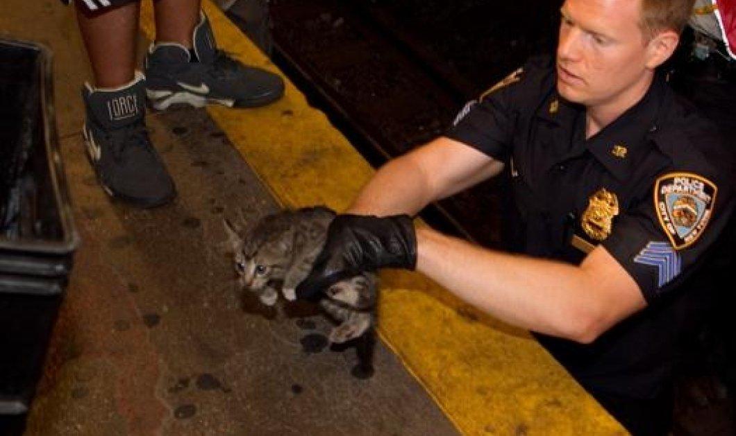 Δύο γατάκια «έκλεισαν» για 2 ώρες το μετρό της Νέας Υόρκης-Είχαν χαθεί στις γραμμές (φωτογραφίες) - Κυρίως Φωτογραφία - Gallery - Video