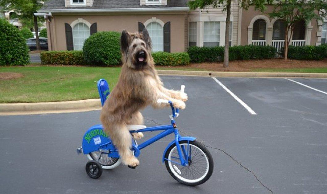 Η φωτογραφία της ημέρας - Ο Νόρμαν έχει καταπλήξει του πάντες και μπαίνει στο βιβλίο Γκίνες κάνοντας ποδήλατο! (φωτό - βίντεο) - Κυρίως Φωτογραφία - Gallery - Video