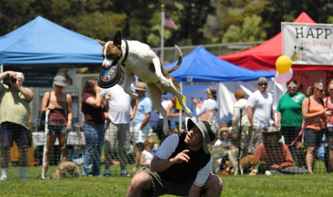 Το πρώτο Διεθνές Φεστιβάλ Σκύλου στην Αθήνα - με επιδείξεις εκπαιδευμένων σκύλων, διαγωνισμούς και εκδηλώσεις! (φωτό) - Κυρίως Φωτογραφία - Gallery - Video