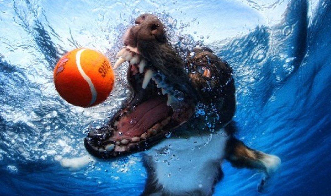 Εκπληκτικές φωτογραφίες με πρωταγωνιστές σκυλιά που κάνουν βουτιές στο νερό για να πιάσουν το μπαλάκι απαθανάτισε ο Seth Casteel! (φωτό) - Κυρίως Φωτογραφία - Gallery - Video