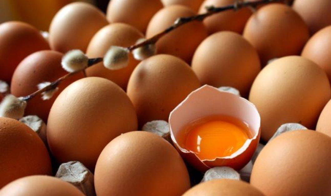 Απίθανο! Δείτε τι θα γίνει αν σπάσεις ένα αυγό στο βυθό της θάλασσας; Παγκόσμια ημέρα του θρεπτικότατου αυγού σήμερα - Αφιέρωμα από το Eirinika! (φωτό - βίντεο) - Κυρίως Φωτογραφία - Gallery - Video