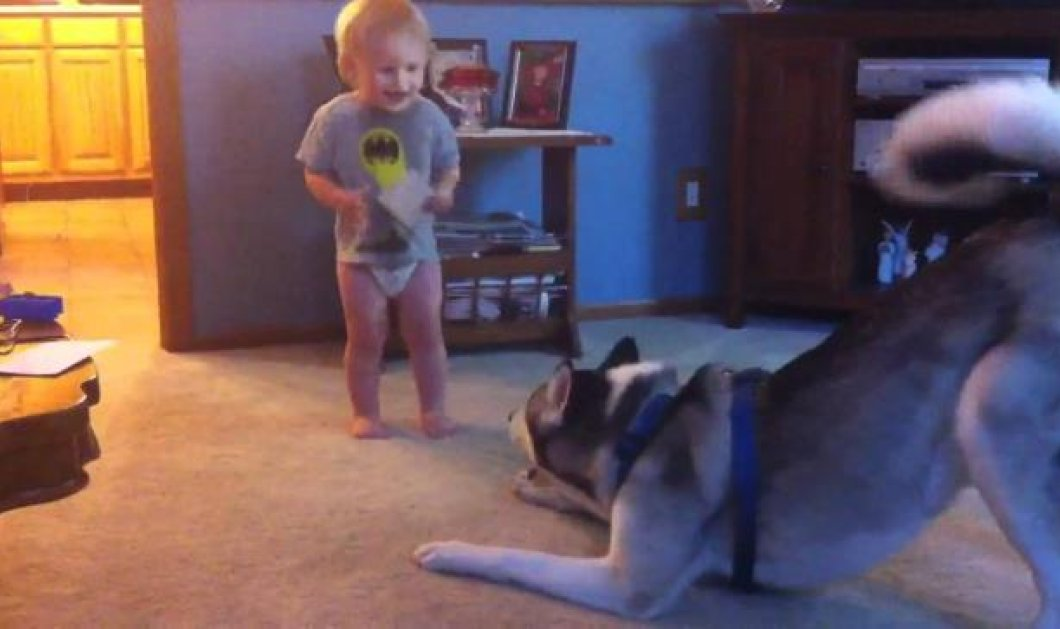 Smile: Ο φοβερός «διάλογος» του ενάμιση έτους μωρού με το λυκόσκυλο του! (βίντεο) - Κυρίως Φωτογραφία - Gallery - Video