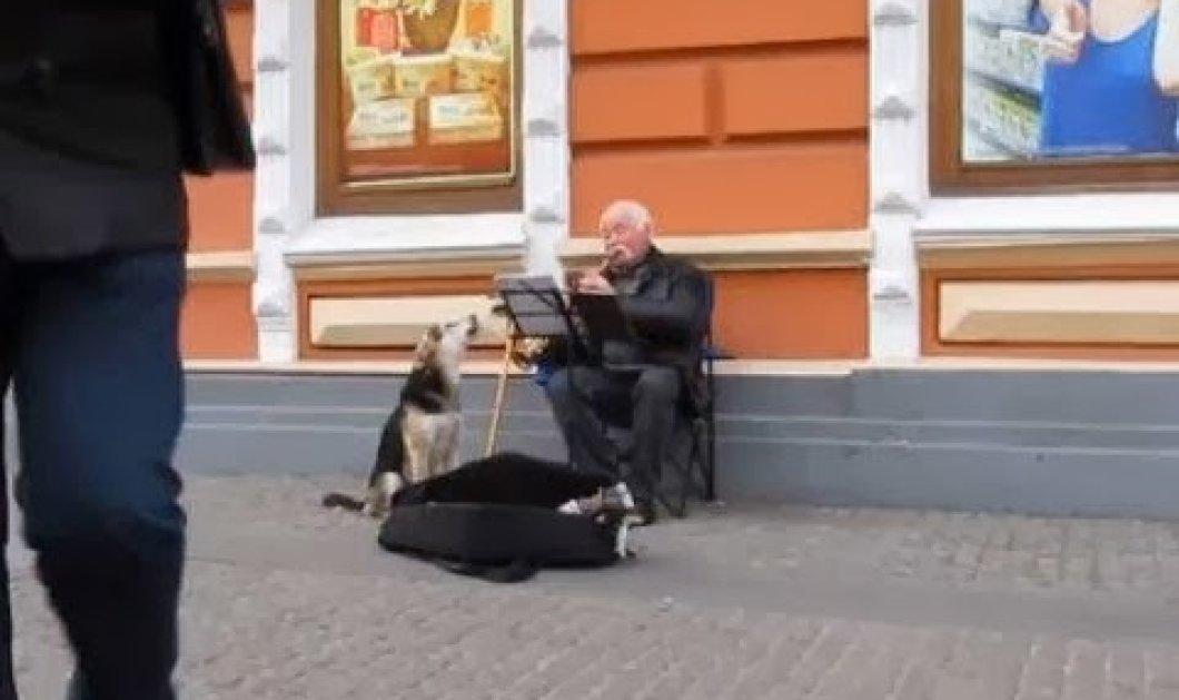Χαχαχα - Πλανόδιος μουσικός πλούτισε στην κυριολεξία όταν ένας σκύλος κάθισε δίπλα του και... τραγουδούσε! (βίντεο) - Κυρίως Φωτογραφία - Gallery - Video
