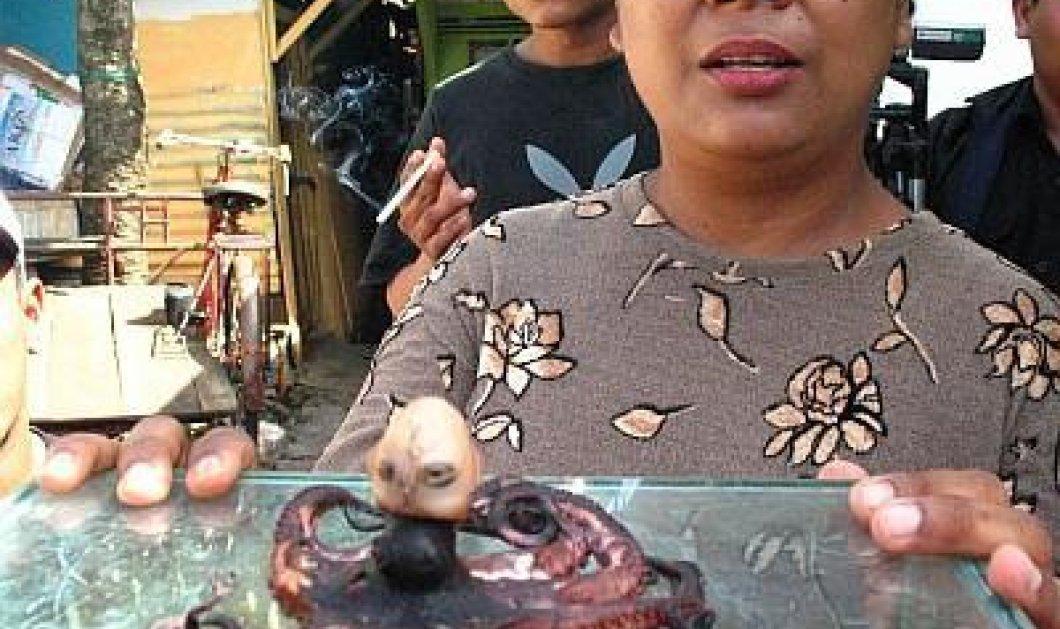 Όλα τα περίεργα στη Μαλαισία θα συμβούν - Δείτε για πρώτη φορά χταπόδι με ανθρώπινο κεφάλι! (βίντεο) - Κυρίως Φωτογραφία - Gallery - Video