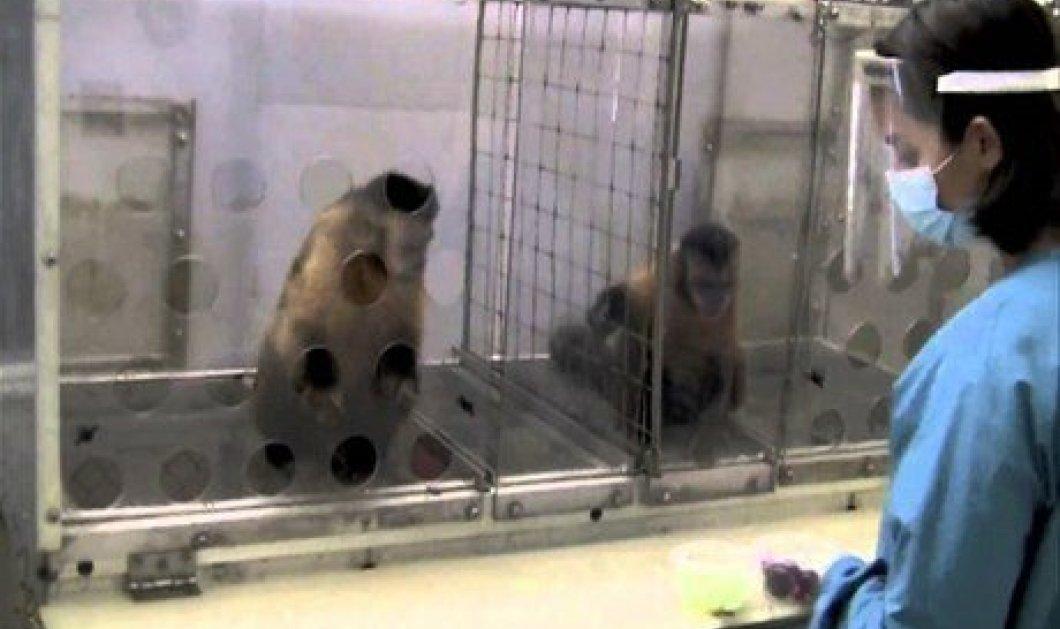 Εκπληκτικό βίντεο: ένα μαϊμουδάκι αντιδρά...εντελώς ανθρώπινα όταν καταλαβαίνει ότι το αδικούν! (βίντεο) - Κυρίως Φωτογραφία - Gallery - Video