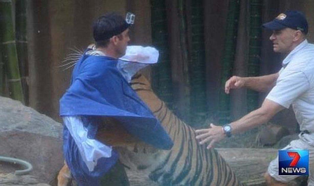 Τρομερό βίντεο με μια τίγρη να επιτίθεται στον εκπαιδευτή της σε ζωολογικό κήπο στην Αυστραλία (βίντεο) - Κυρίως Φωτογραφία - Gallery - Video