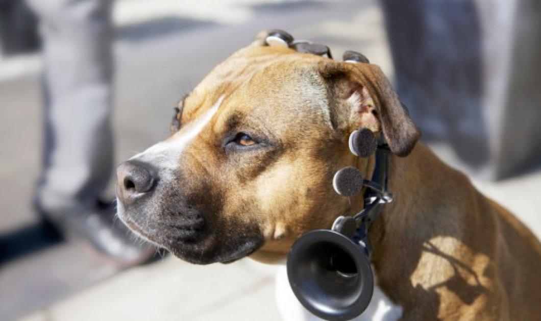 Εκπληκτικό: Συσκευή κάνει τους σκύλους να «μιλούν» (βίντεο) - Κυρίως Φωτογραφία - Gallery - Video