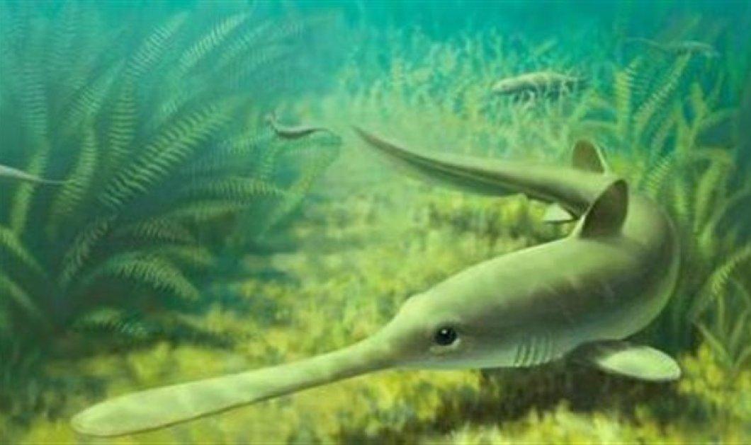 Αυτός είναι ο αρχαίος καρχαρο...ξιφίας που ζούσε πριν 310 εκατ. χρόνια  - Κυρίως Φωτογραφία - Gallery - Video