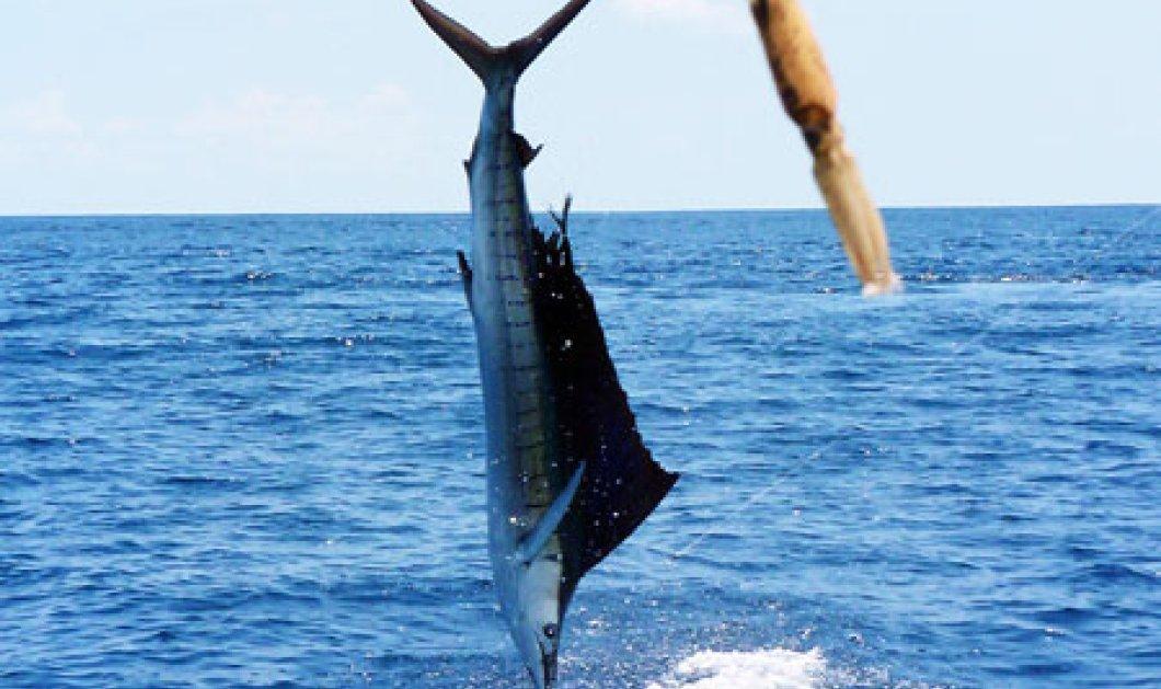 Τεράστιο ψάρι «προσγειώθηκε» πάνω σε καΐκι-Οι ψαράδες έπεσαν στη θάλασσα για να...γλυτώσουν! (βίντεο) - Κυρίως Φωτογραφία - Gallery - Video