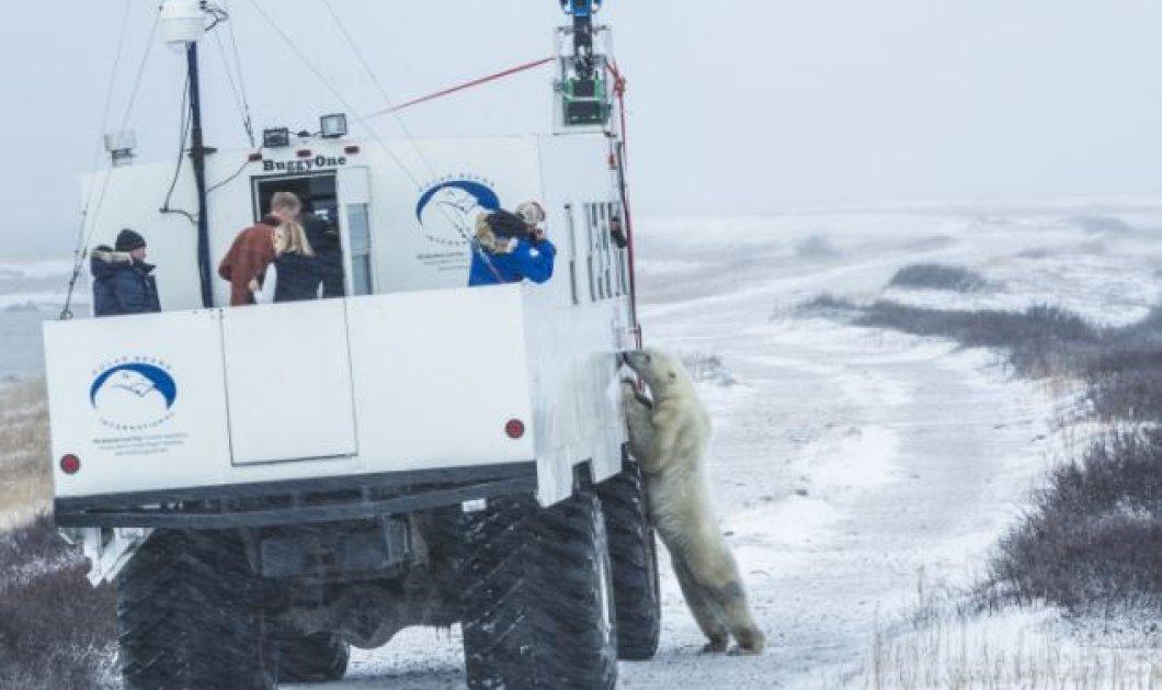 Το Google Street View εισέβαλε στην «πρωτεύουσα» των πολικών αρκούδων και τράβηξε εκπληκτικές φωτό και βίντεο! - Κυρίως Φωτογραφία - Gallery - Video