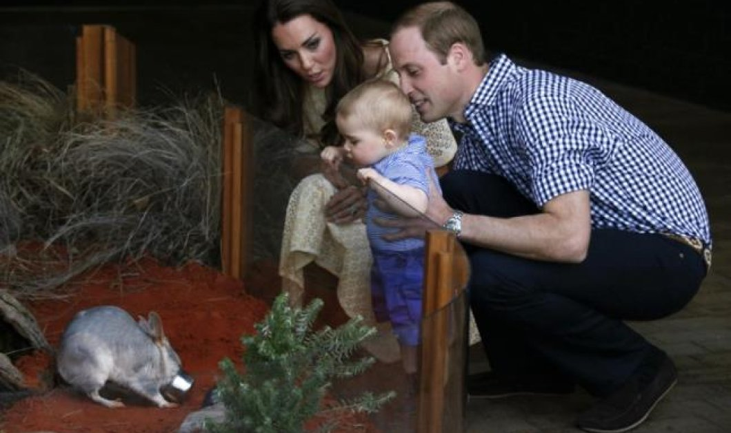 Royal Tour ημέρα 14η και καλύτερη : Επίσκεψη με βασιλόπουλο George στον ζωολογικό κήπο! Κέιτ και Γουίλιαμ χαζο - μαμά μπαμπάς πολύ δικαιολογημένα! Φωτογραφίες σουπερ! - Κυρίως Φωτογραφία - Gallery - Video