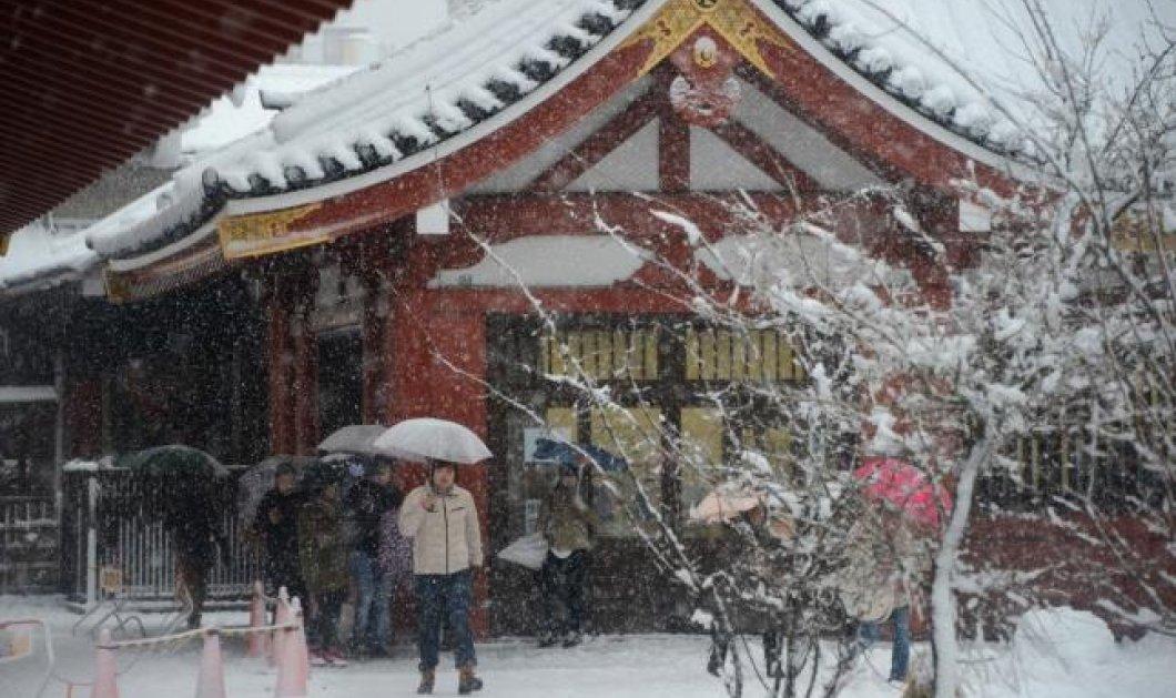 Παραμυθένιες φωτογραφίες με Γκέισες από το χιονισμένο Τόκυο (φώτο) - Κυρίως Φωτογραφία - Gallery - Video