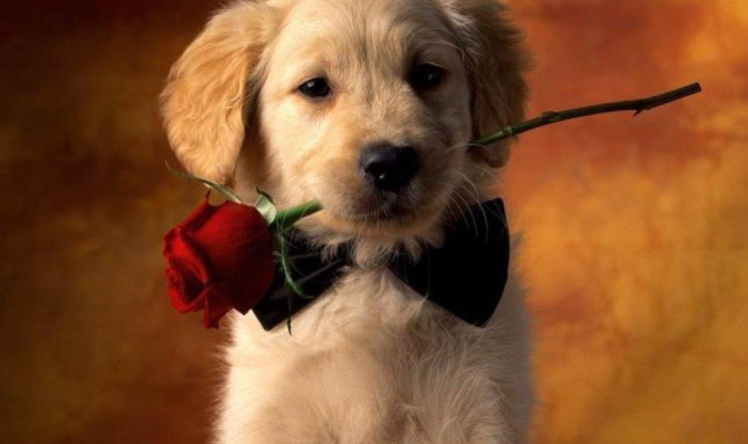 Αποκλειστικό: Γνωρίστε το Doggrin, το πρώτο site στην Ελλάδα για να βρείτε ταίρι στον σκύλο σας! Νόμιμες & δωρεάν αγγελίες για να ζευγαρώσει το σκυλάκι σας με το κατάλληλο, άλλο του μισό! (φωτό) - Κυρίως Φωτογραφία - Gallery - Video