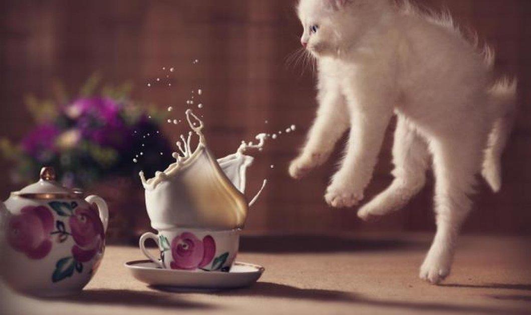 Ώρα για να σας καταπλήξουμε με 25 γάτες - νίντζα ! Δείτε το πολυαγαπημένο κατοικίδιο - γεννημένο αιλουροειδές να πηδά με απίστευτη χάρη & σβελτάδα (φωτό) - Κυρίως Φωτογραφία - Gallery - Video
