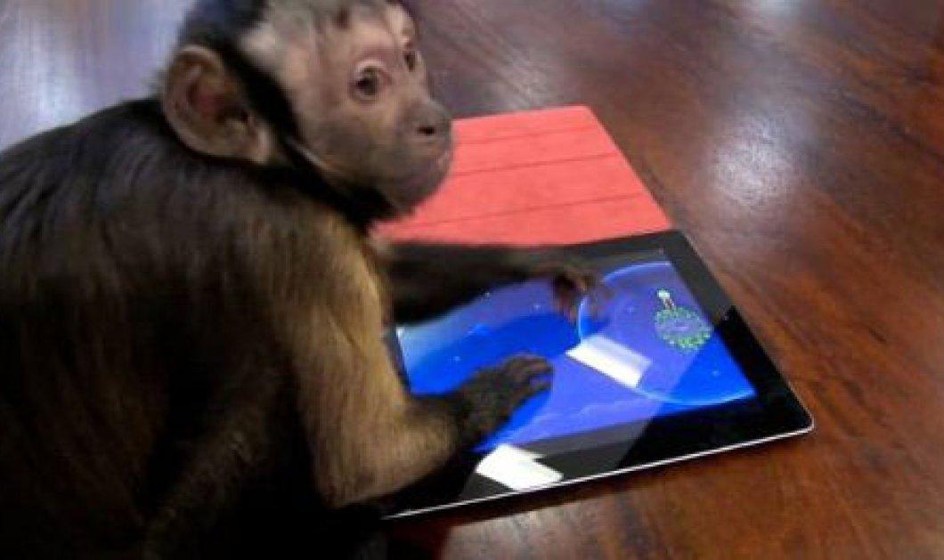 Πίθηκοι με iPad σε ζωολογικό κήπο - να δεις που παίζουν και angry birds!  - Κυρίως Φωτογραφία - Gallery - Video