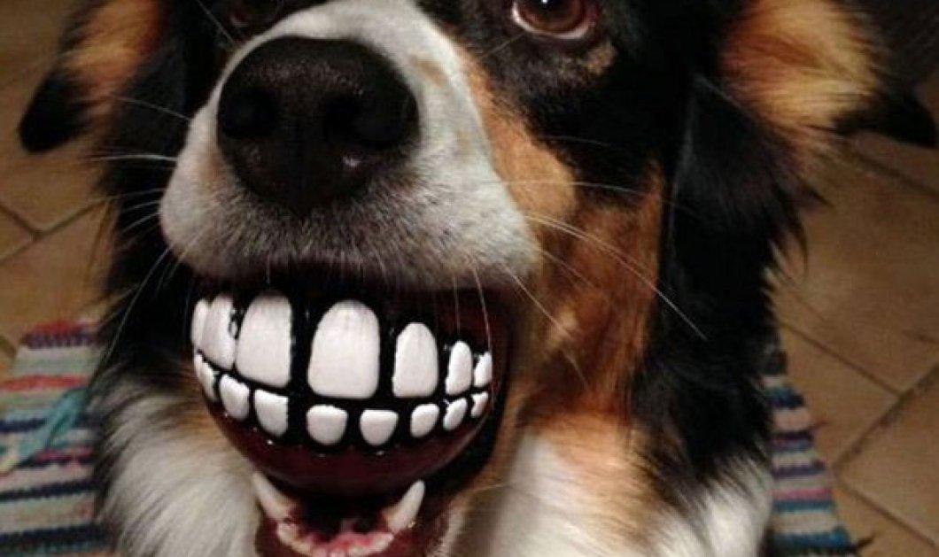 Υπέροχα σκυλάκια που σκάνε «τεράστιο» χαμόγελο με το καινούριο τους παιχνίδι (εικόνες και video) - Κυρίως Φωτογραφία - Gallery - Video